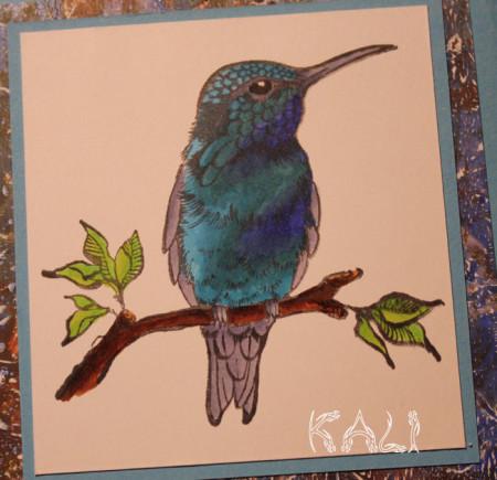 kolibri close